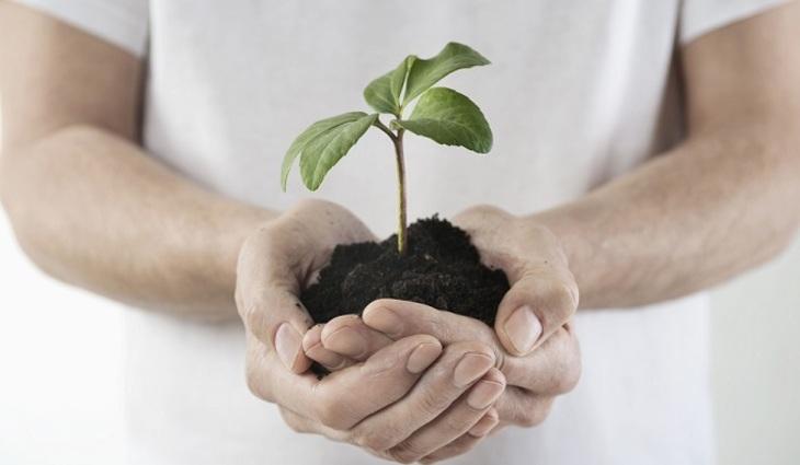 Растения умеют думать