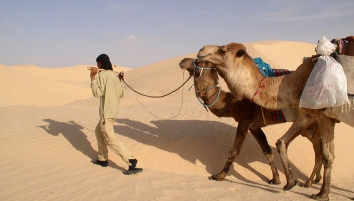 Ученые: пустыня Сахара покроется зеленью вближайшие годы