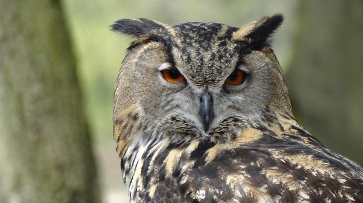 Зоозащитники обвиняют Гарри Поттера в истреблении сов