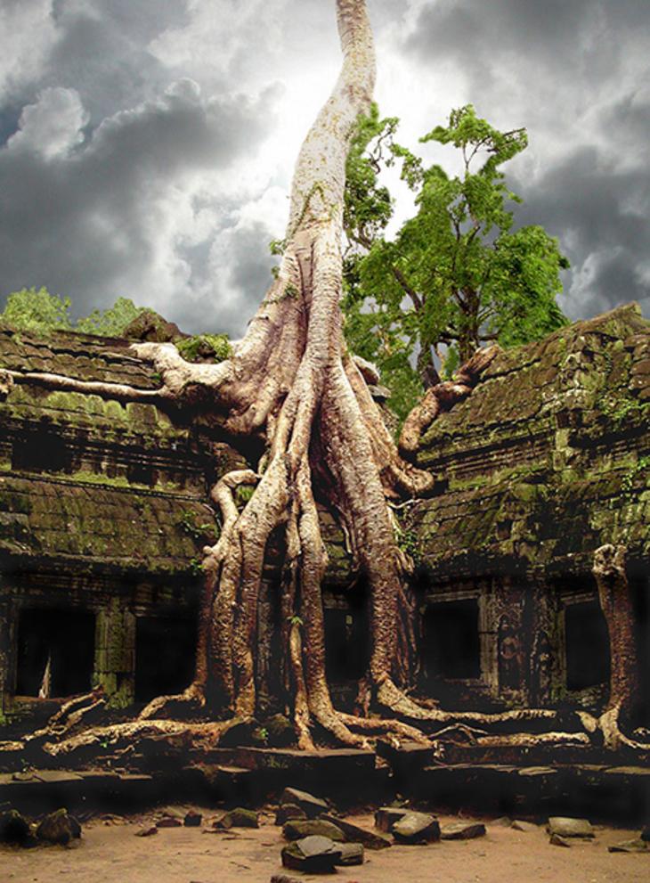 приобретает странное дерево фото будешь