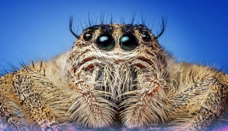 ВАвстралии прошел «дождь» изсмертельно рискованных пауков