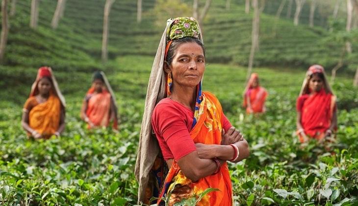 Жуки стали первопричиной запрета напоставки чая изШри-Ланки в РФ