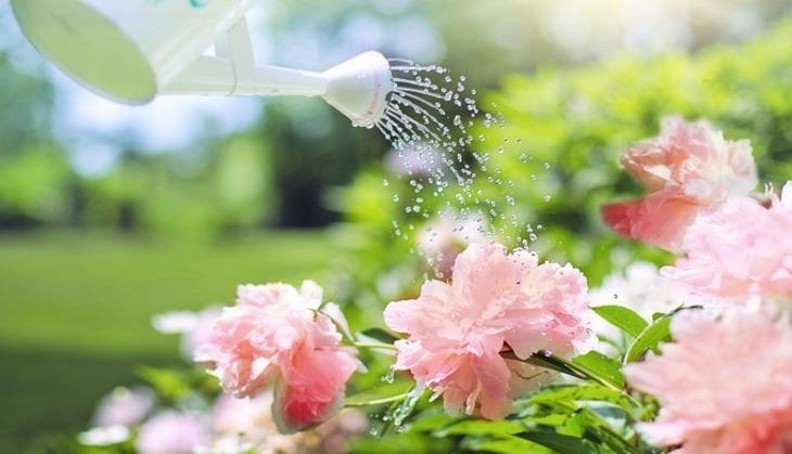 Государственная дума РФодобрила освобождение садоводов отуплаты пошлины задобычу воды