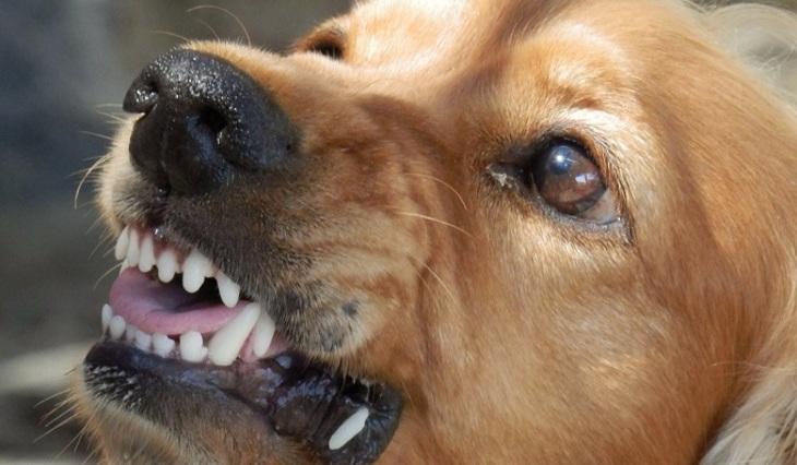Под Белгородом бешеная собачка покусала 17 человек