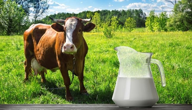 Чем опасно молоко?