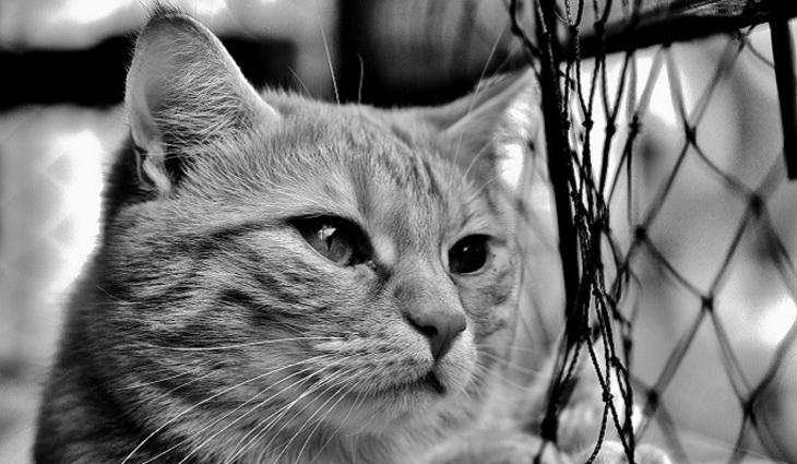 Под Тулой схватили кота с гашишем