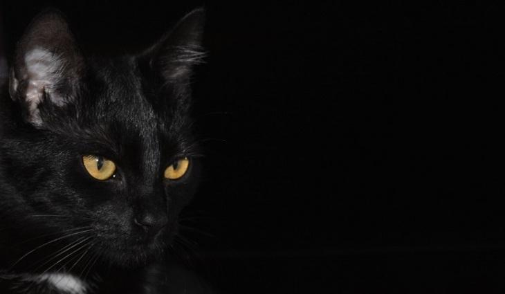 Для кого опасна черная кошка?