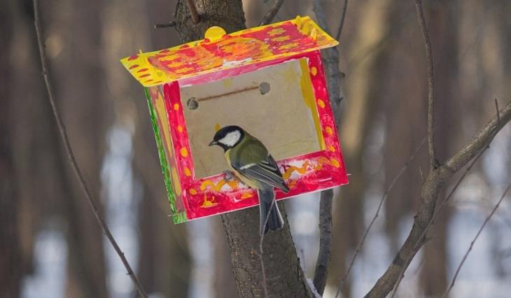 How to help birds in winter - photo