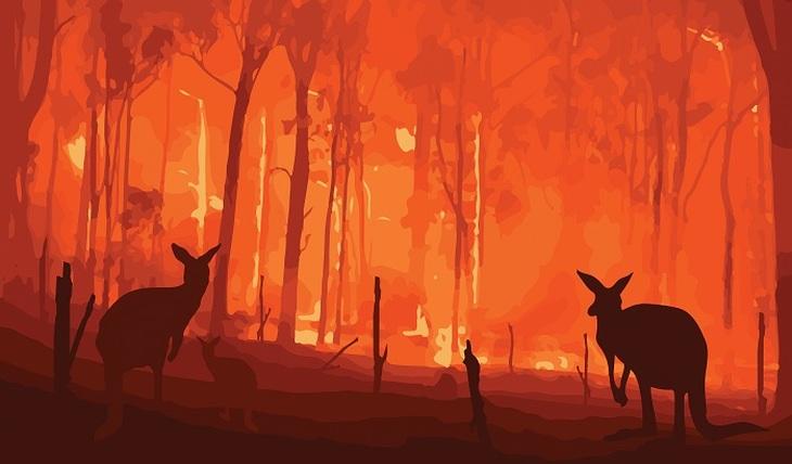 Австралийцы сжигают свою страну