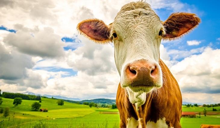 Лейкозному молоку дали зеленый свет
