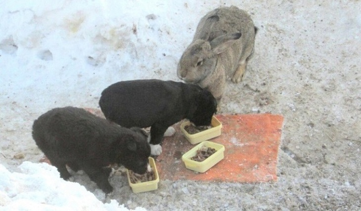 Rabbit became a nanny for ... puppies - photo