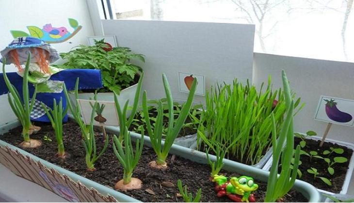 Грядки на окне цветочки огород на балконе, на подоконниках.ц.