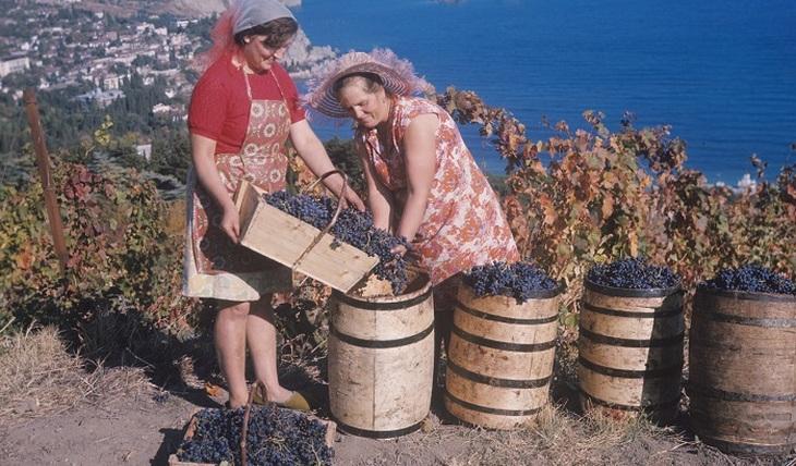 Stumbling Vine - Photo
