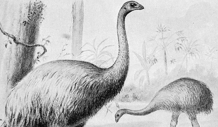 Легенды и были о птице Рух - фото