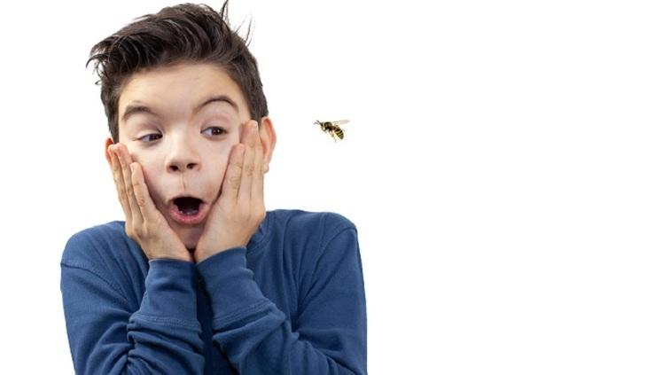 Когда пчела «под мухой» - фото