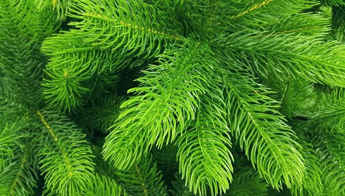 Секреты лесной красавицы